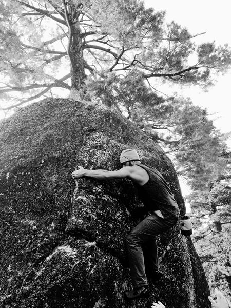 Rock Climbing Photo: Black and White Burl Fest!!!