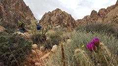 Rock Climbing Photo: Black Velvet Canyon Red Rock