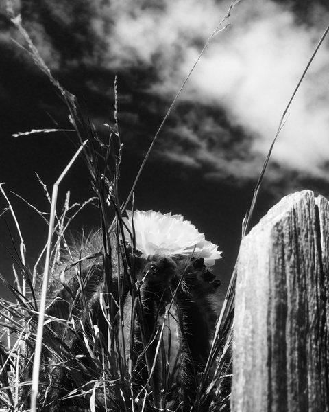 Rock Climbing Photo: B&W Cacti Flora!!!