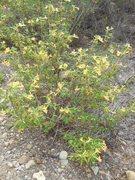 Rock Climbing Photo: Wildflowers on the Backbone Trail to Saddle Peak.