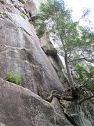 Rock Climbing Photo: Looking up Rock On from the base. There is a climb...