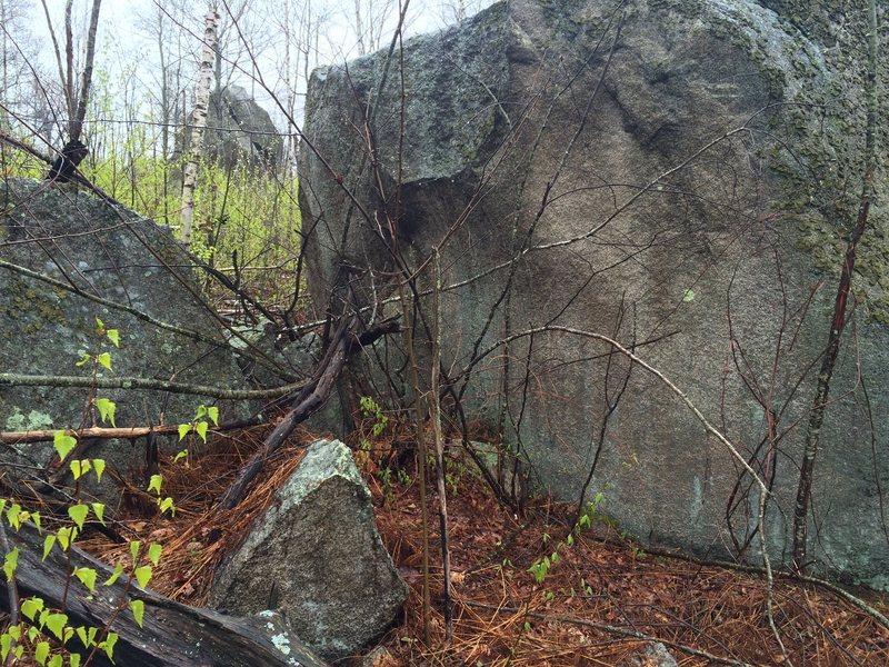 A boulder in Spring Pond Woods.