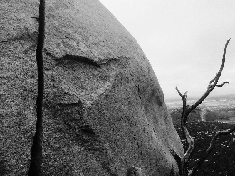 Rock Climbing Photo: The Splitter and the Tree!!