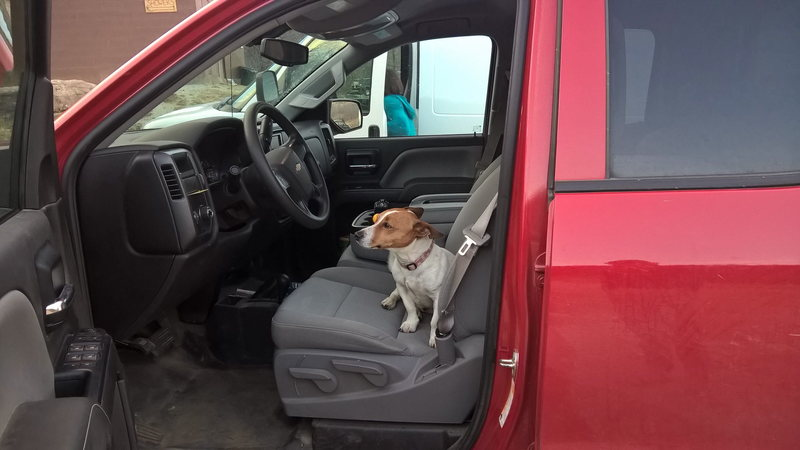 They say to not play with the ranch dogs, but sometimes they play with you. Peanut taking the wheel