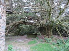 Rock Climbing Photo: An old tomb under a massive Yew Tree