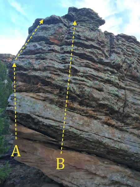 A) Monochorionic<br> B) Diamniotic