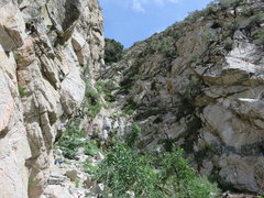 Rock Climbing Photo: View up the canyon from the lower tier