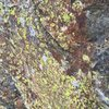 Lichen - you're going to love it!