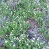 Wild flowers near the Capricorn Wall.