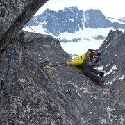 Rock Climbing Photo: the rare alpine ostrich