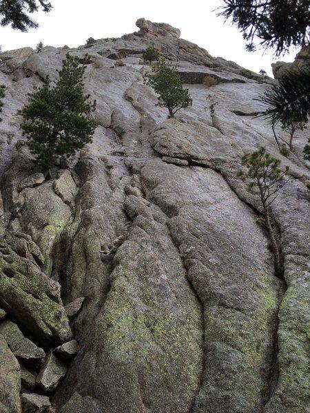 Rock Climbing Photo: Wet Dog.