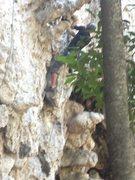 "Rock Climbing Photo: The bottom section of ""Ruam Jai"" - a lon..."