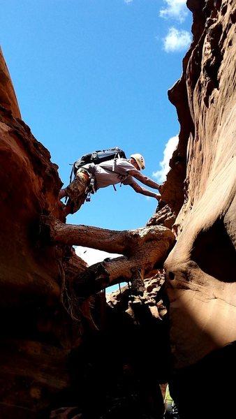 Stemming at the s log in blue John canyon, utah