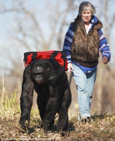 ape pack