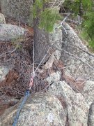 Rock Climbing Photo: The tree that can be used for an anchor.