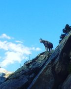 Rock Climbing Photo: i guess goats can climb 5.8...
