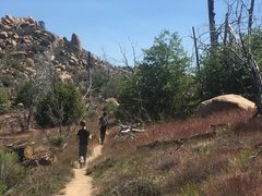 Rock Climbing Photo: On the PCT west of the tower, but heading back to ...