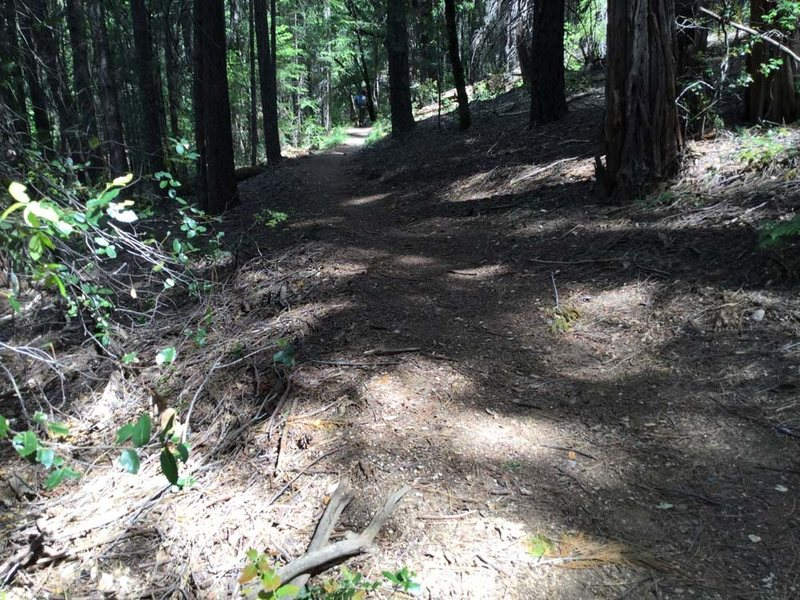 Climber trail merges with the PCT, go left. Remember where this branch is, you have find it on the back.