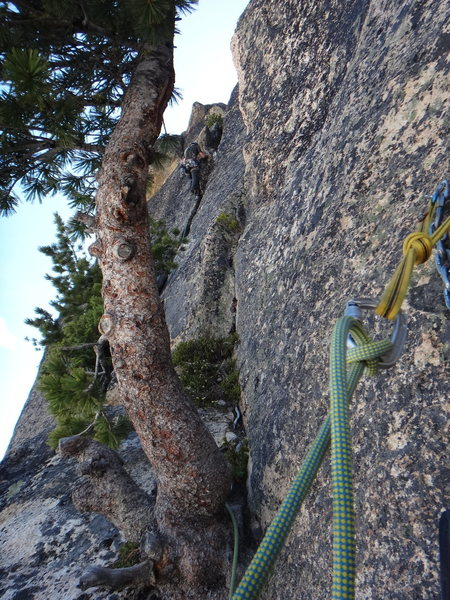 The start of pitch 8. Climb through the tree and up the wide crack to reach the base of the bolted 5.10 slab.
