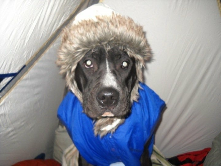 Rock Climbing Photo: Arctic Alpine Bivouac Doggy!!!