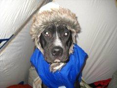Rock Climbing Photo: Arctic Alpine Bivouac Doggy!!!