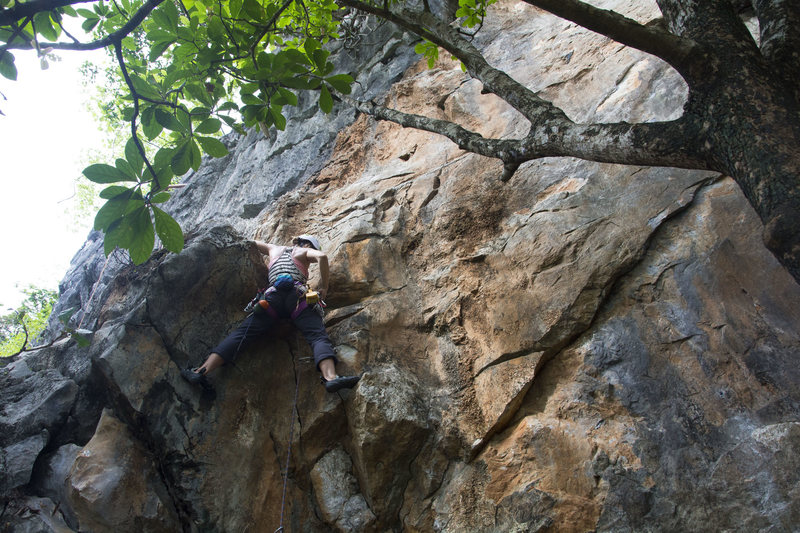 Rock Climbing Photo: Katie at the second bolt of Elephant Leather