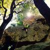 Climbing into the sun.