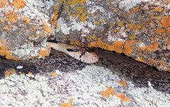 Rock Climbing Photo: dangerous pit viper