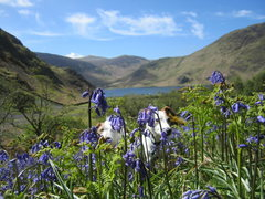 Rock Climbing Photo: Dogs and Bluebells .. Buttermere Valley