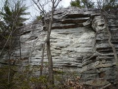Rock Climbing Photo: The route climbs just to the right of the tree tru...