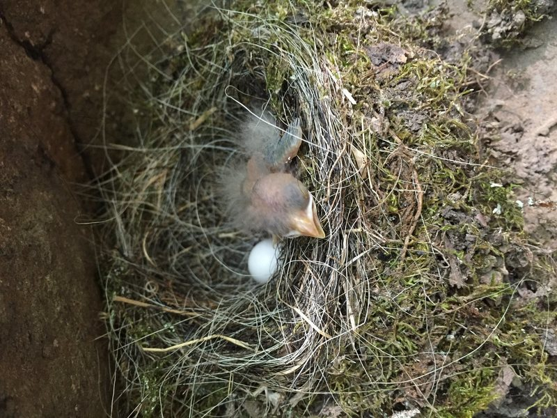 Rock Climbing Photo: Birds on frankenrock