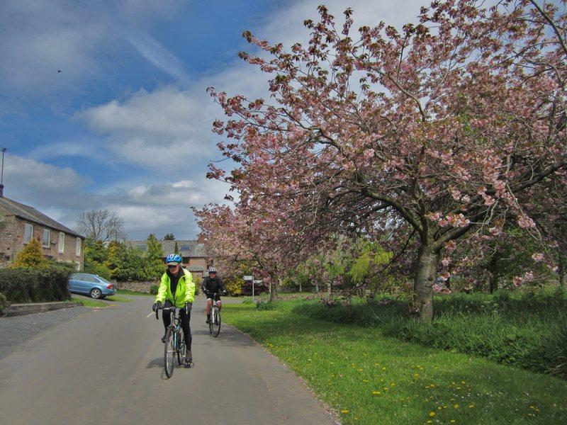 Biking in spring .