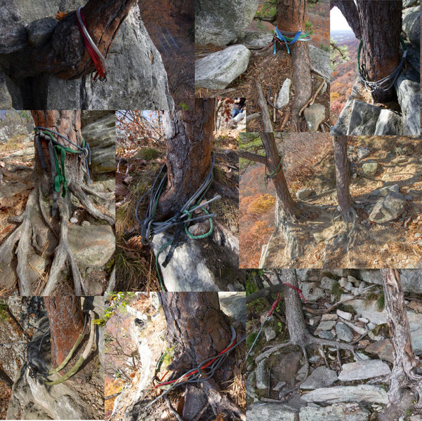 Examples of Gunks tree rappel anchors in 2014
