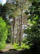 Rock Climbing Photo: Scotch Pines