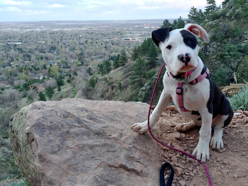 My doggie learning the hillsides @ 6 months