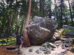 Rock Climbing Photo: Twisted Tree.