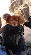 Rock Climbing Photo: Met this little guy at the top of the route. his p...