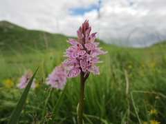 Rock Climbing Photo: British bog orchid
