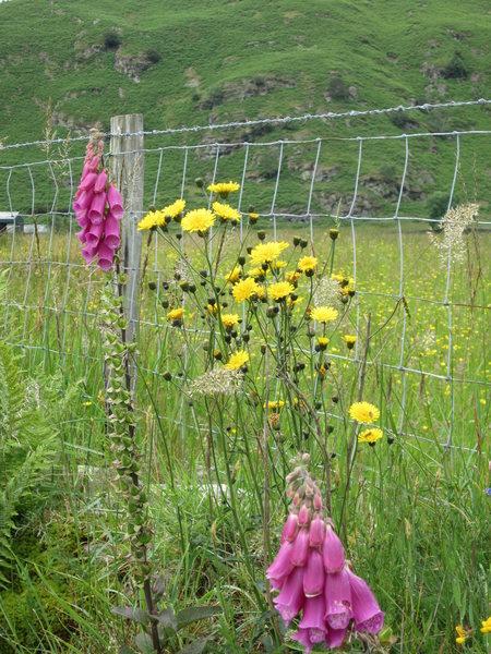 Lakeland Wild Flowers