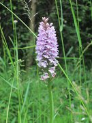 Rock Climbing Photo: Wild British Orchid