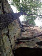 Rock Climbing Photo: Ants Line