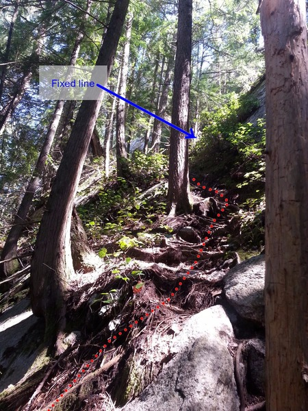 The fixed lines on the approach gully were difficult to find. We followed a faint trail away from Fungus the Boogeyman (and Campground Wall) toward the right, walked slightly uphill scrambling over a few boulders and still following a faint path for 5-10 minutes. The path then switchbacks left steeply up roots (shown in photos) to the first fixed line.