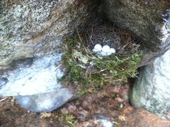 Rock Climbing Photo: Bird nest in the right start hold