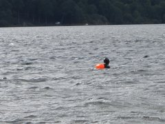 Rock Climbing Photo: Long distance Lake Swimmer