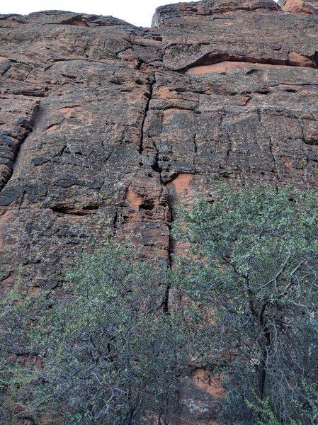 Rock Climbing Photo: Bats meow