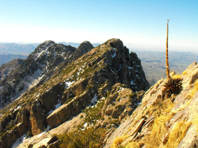 Rock Climbing Photo: A century plant blooming atop Brown's Peak.
