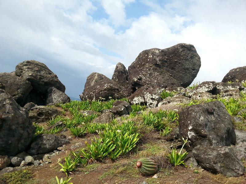 Rock Climbing Photo: The boulders