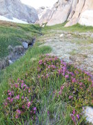 Rock Climbing Photo: Alpine meadows