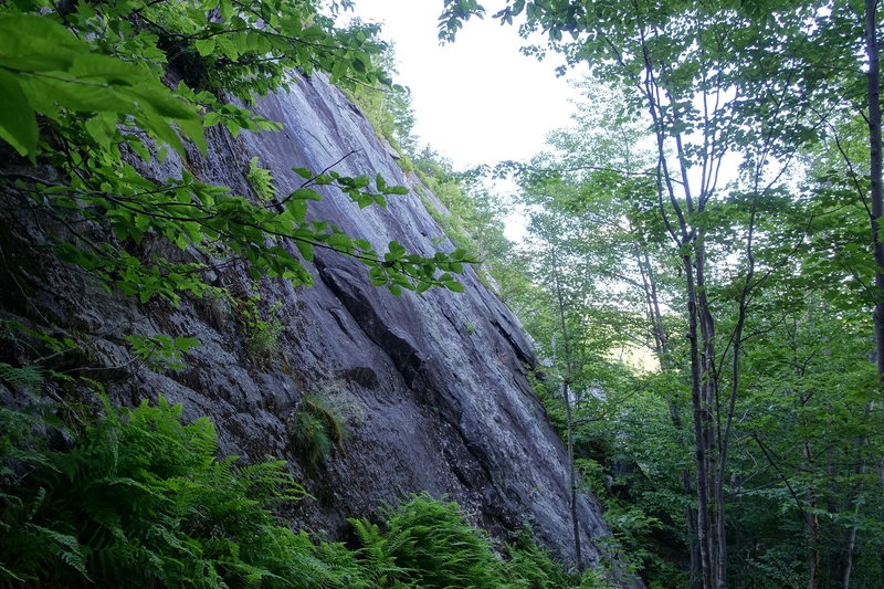 Rock Climbing Photo: Another view of Forist Grump