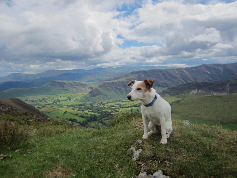 Bess on The Ard Cragg Ridge .. Newlands Valley
